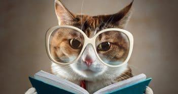 Qualifizierungschancengesetz; Katze liest in Buch
